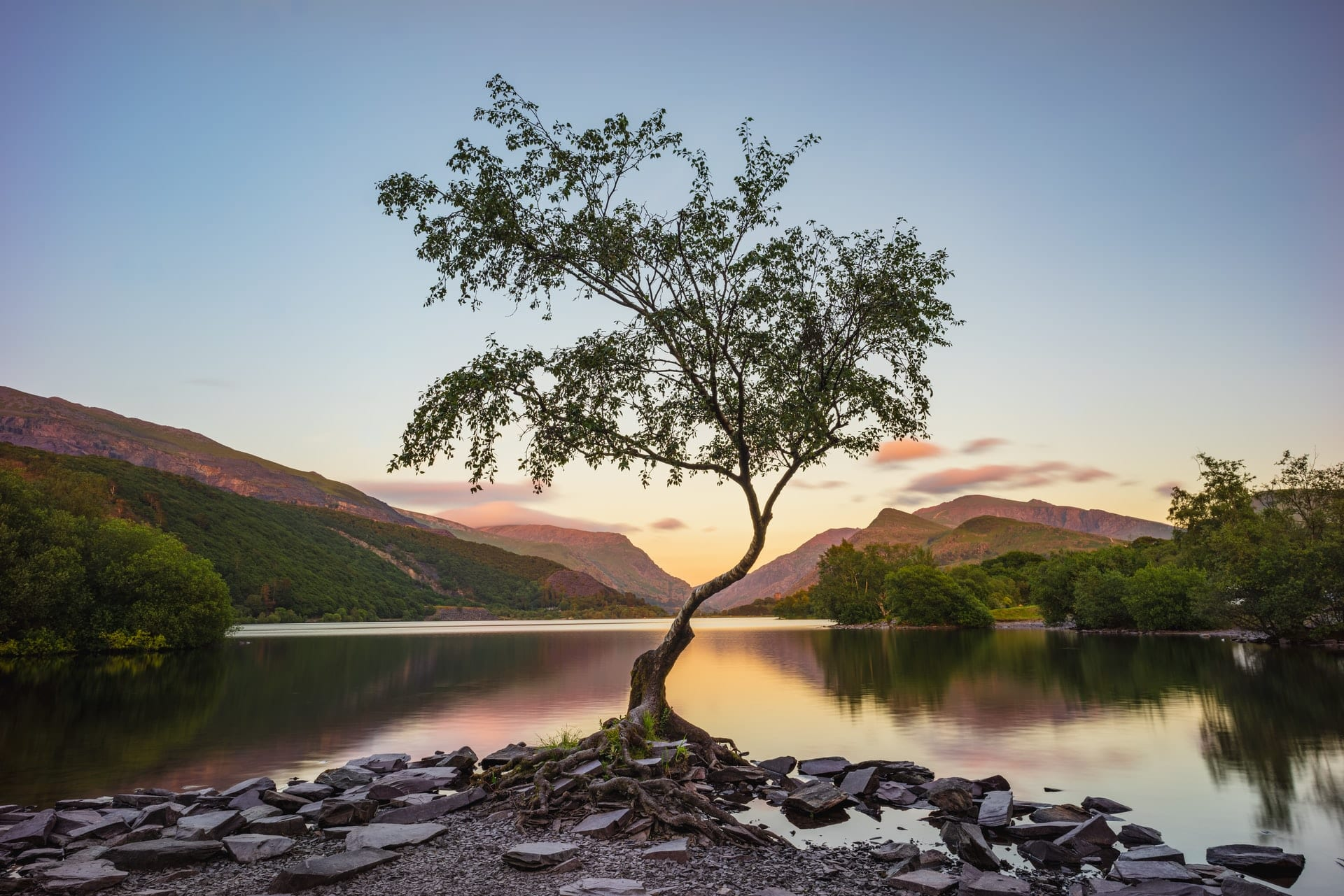 lone-tree-standing-by-llyn-padarn-lake-by-mountains-at-sunrise-in-llanberis-snowdonia-national-park-wales