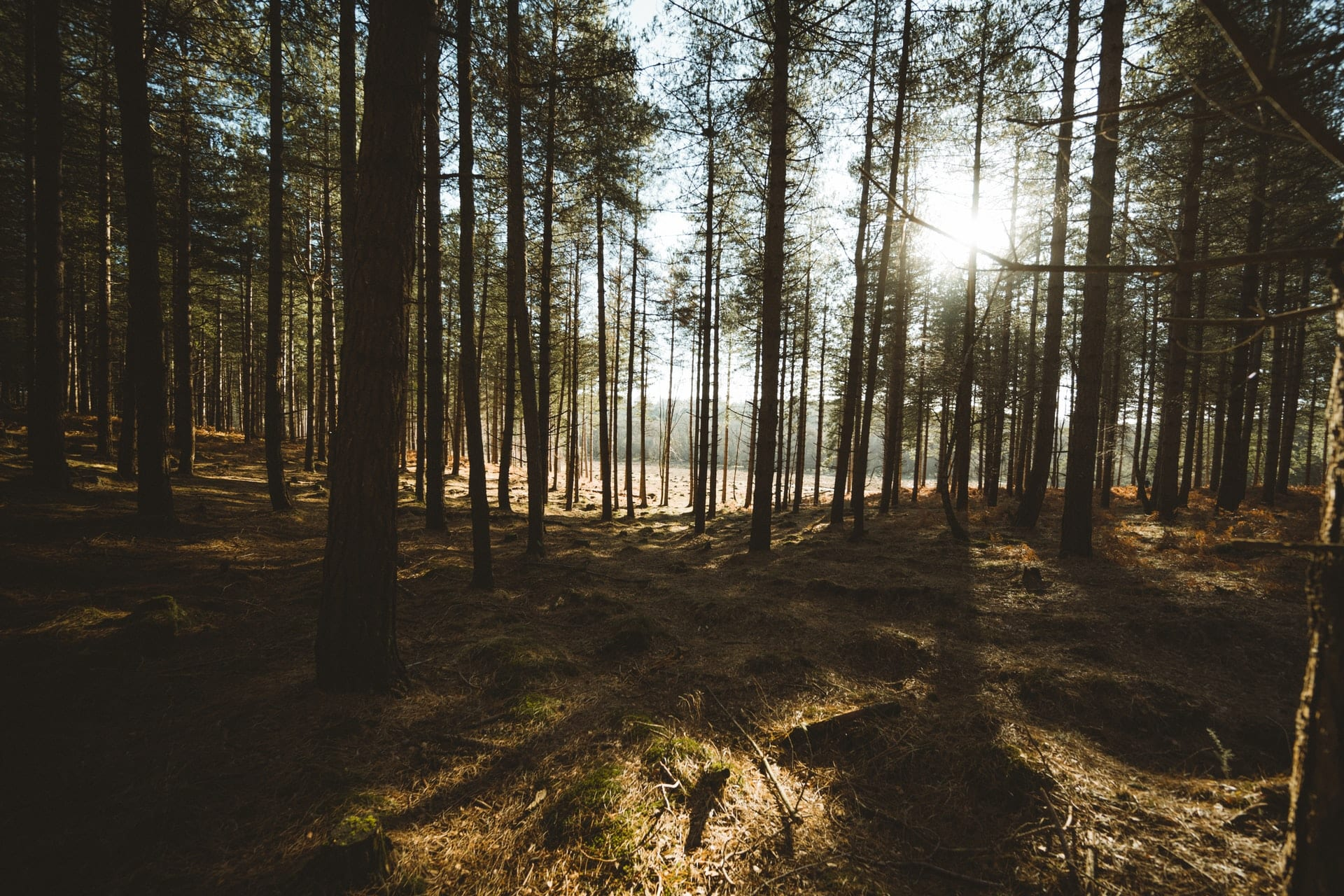 sunlight-pouring-into-forest-new-forest-national-park-england